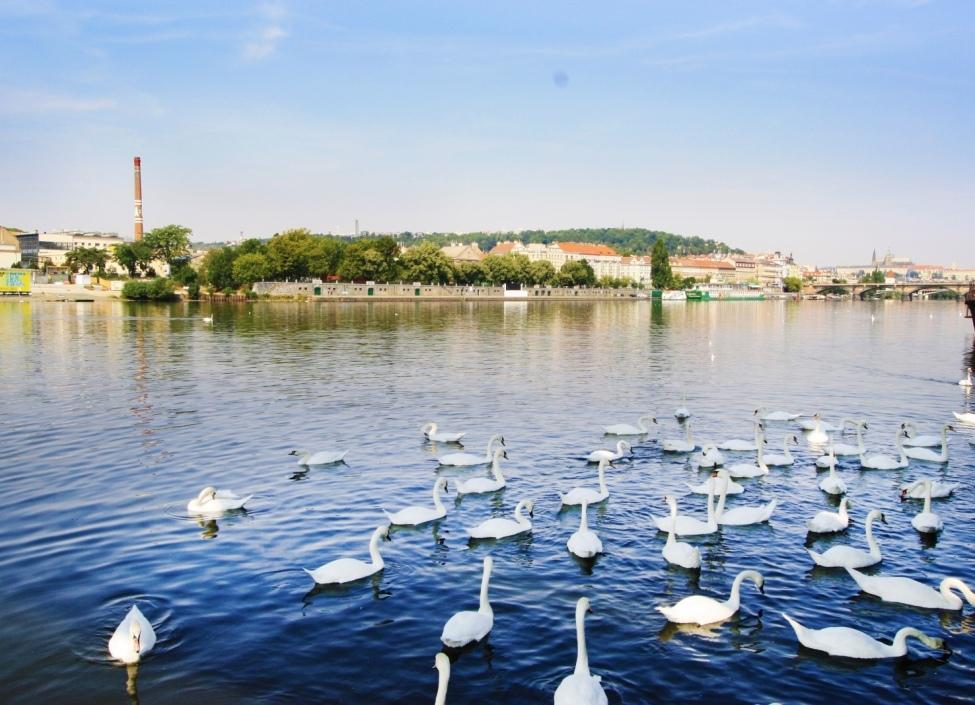 Mezonetový byt s terasou Praha 2 - 204m 0