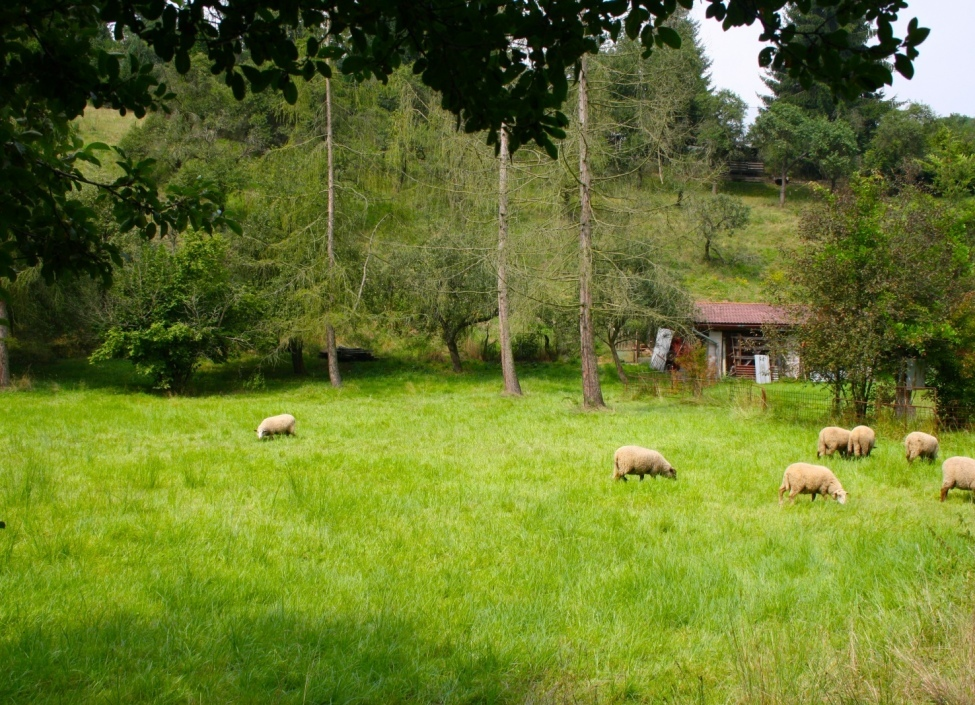 Vila Šárecké údolí 355m 0